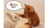 ネコ うさぎ 可愛い 動物